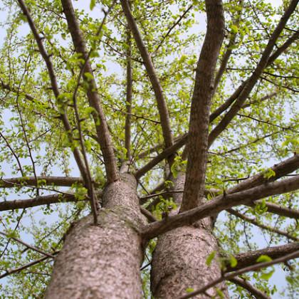 mr Julia Veldkamp advocaat mediator coach   Duurzaam Huwelijk Twee bomen vergroeid